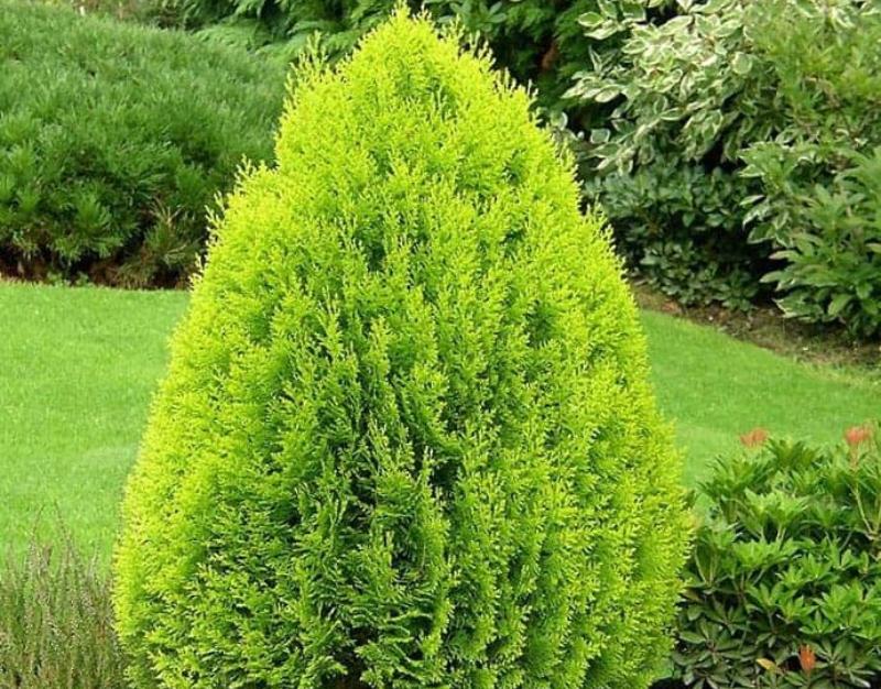 11 όμορφα φυτά για φράχτη